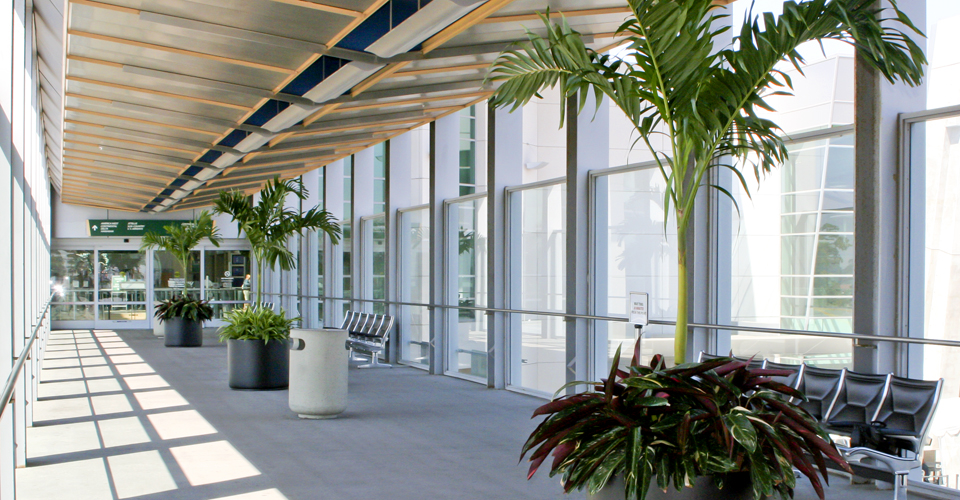 Leasing, Plant Leasing, Interior Plants, San Diego, Indoor Plants, Plant Rental, Office Plants