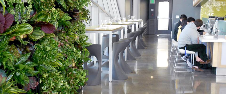 Interior Plants, Office Plants, Plant Walls, Live Walls, Green Walls, Indoor