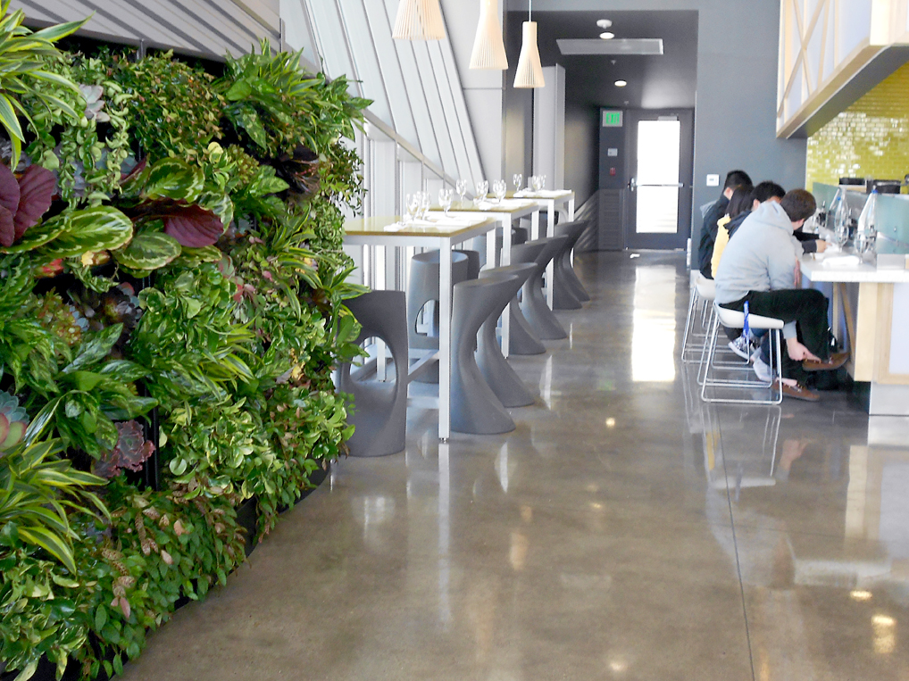 green wall, living wall, live wall