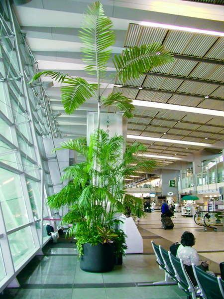 plants at the airport