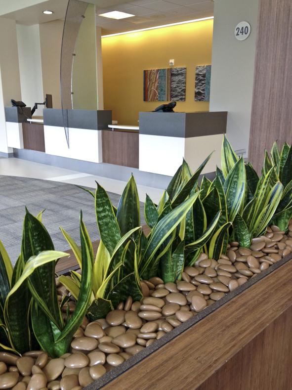 plants in lobby