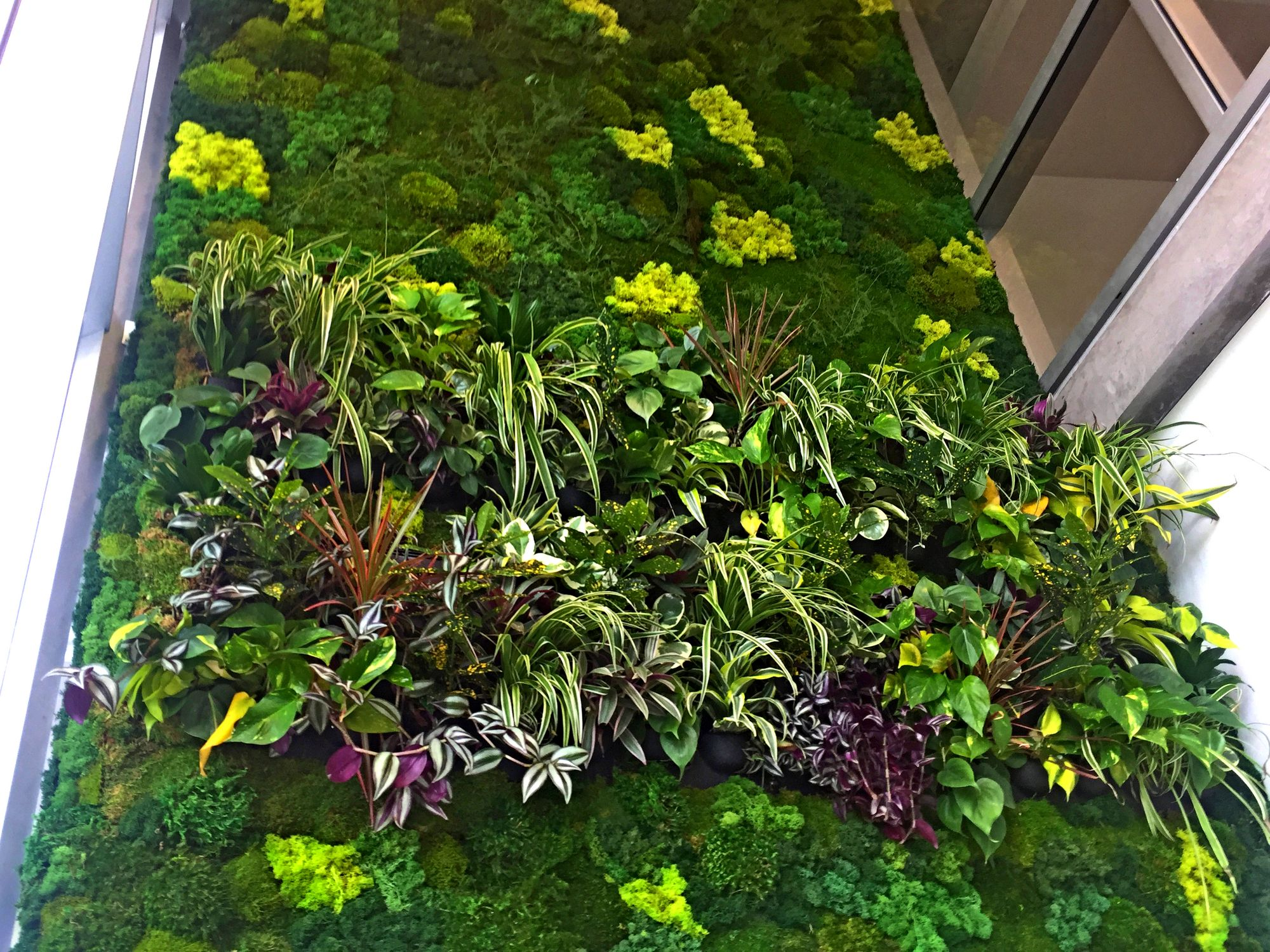 Both A Preserved Moss Wall And Tropical Live Integrated To Create An Organic Piece Of Art