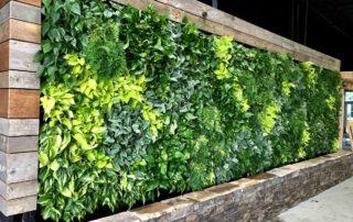 living wall, live wall, green wall, plant wall, vertical garden