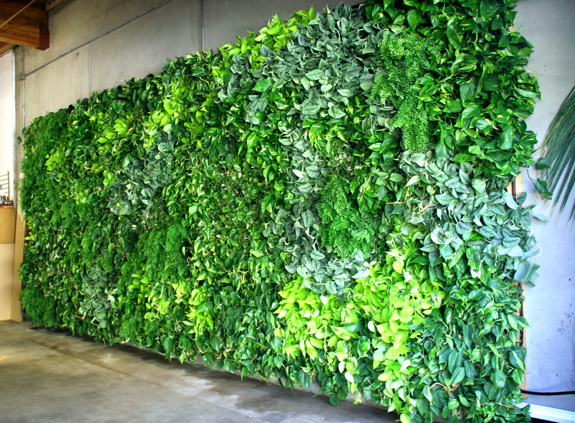 Vertical Gardens In San Diego