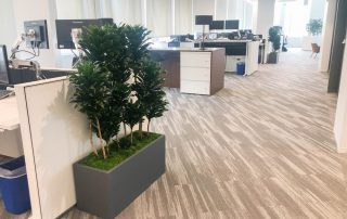 Why do you need plants in your office and home in San Diego?