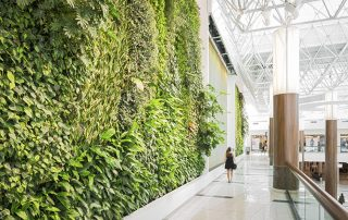 Is a Green Wall more than an aesthetic feature in San Diego