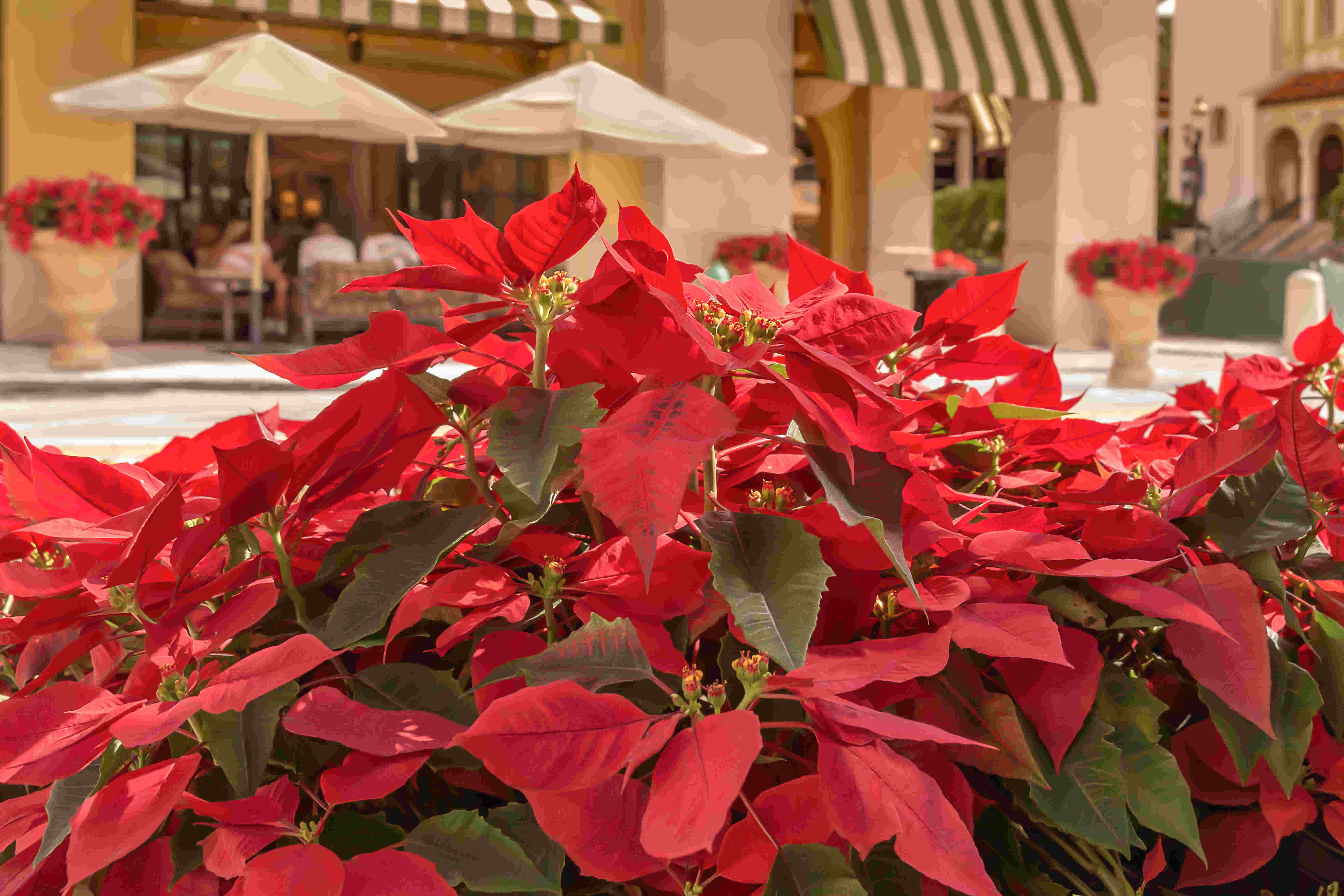 Decorating Your Office Space with Holiday Plants