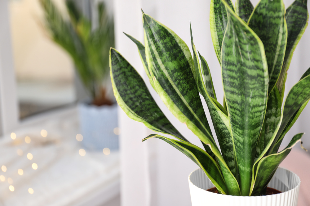 The Best Clean Air Plants for your Home or Office