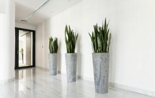 Plant Care Service