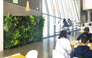 The Best Plants to Make Your Restaurant More Attractive