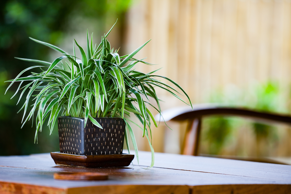 Plants That Will Make Your Restaurant More Pleasant for Customers