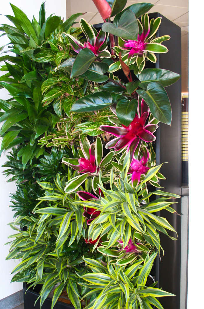 How Plantscaping Can Help Promote Social Distancing