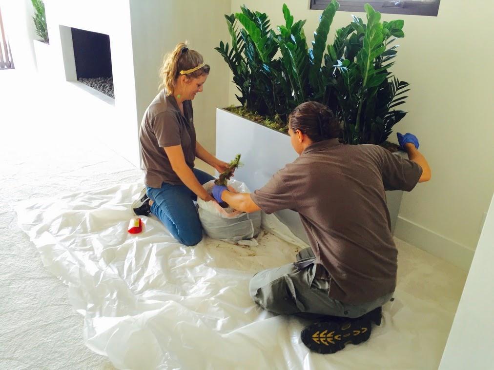 Greenleaf IPS Installing Indoor Plant