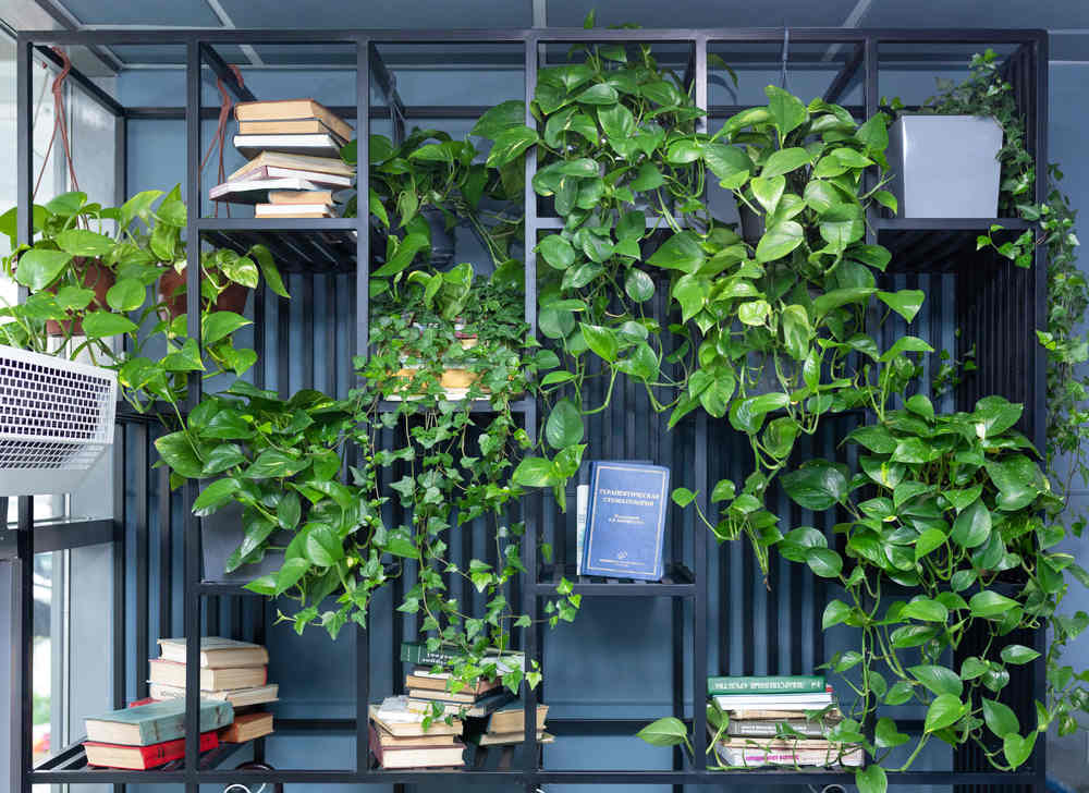 Best Low Maintenance Indoor Plants for your Commercial Space