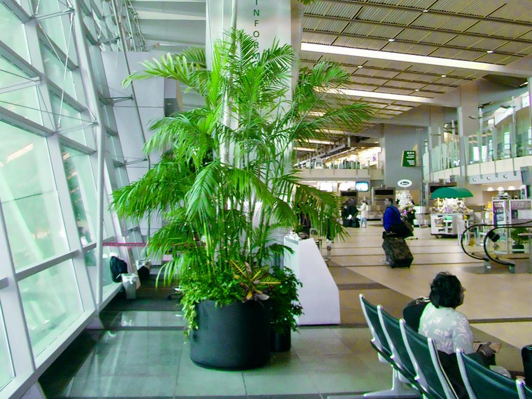 San Diego Airoport