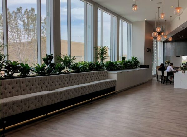 A variety of tropical plants placed in a built-in planter in the reception space