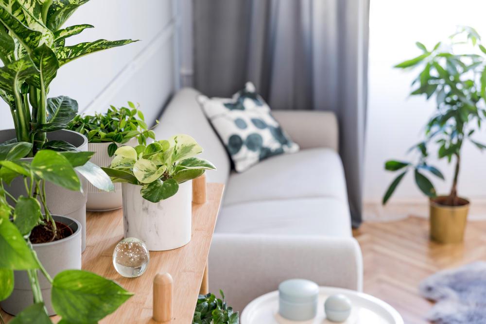 Top Six Best Air Filtering Houseplants According to NASA